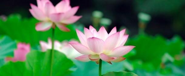 esprit lotus