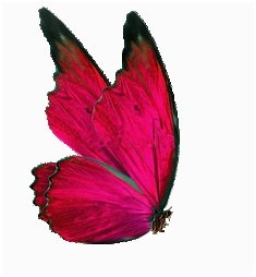 Papillonlogo violette